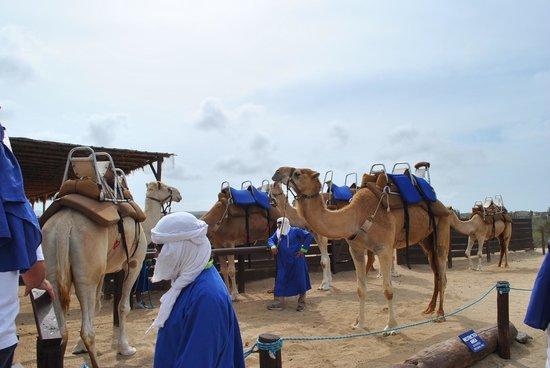 Outback & Camel Safari: Camel Safari