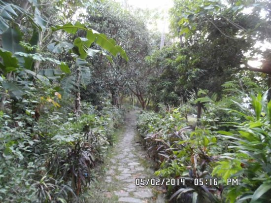 Coco Beach Resort : The trail going to the Heritage Room