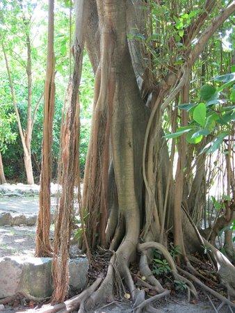 Museo Maya de Cancun: museum walk