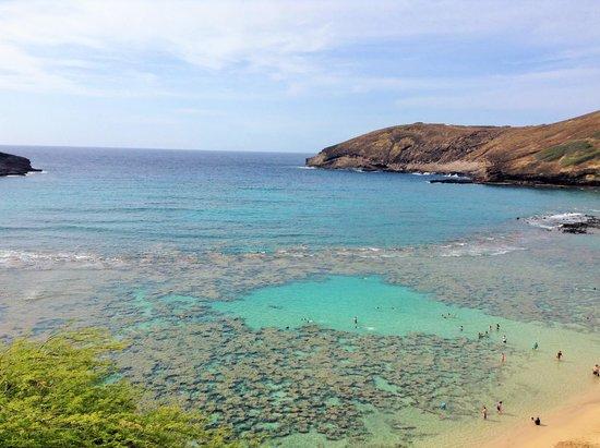Hanauma Bay Nature Preserve : El coral desde afuera