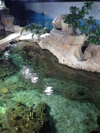 Acquario di Genova: Una delle tantissime vasche dell acquario.