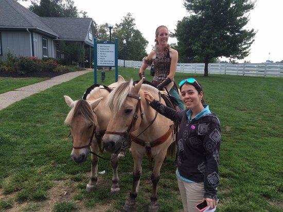 Kentucky Horse Park : Norwey Fjord