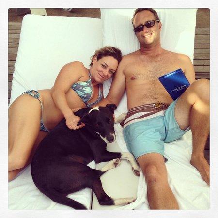 The Modern Honolulu: Pet Friendly