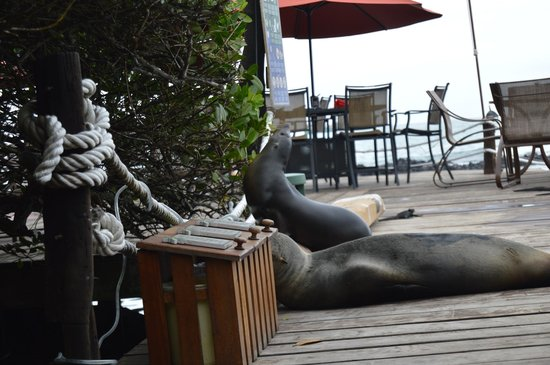 Maidith White Cove: Deck to have dinner and sit by sea lions