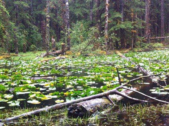 Glacier Bay Lodge: Pond on the Forest Trail