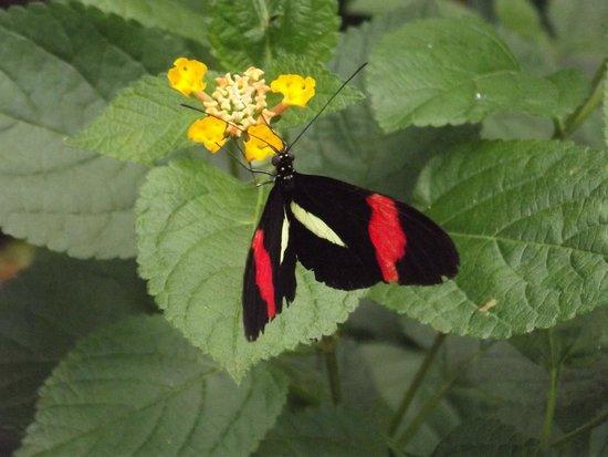 Chateau de Goulaine : farfalla del padiglione