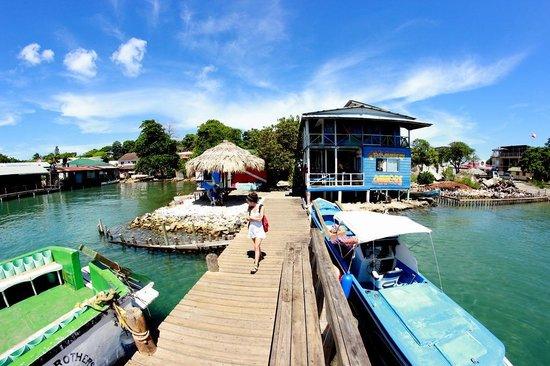 Paradise Divers Utila