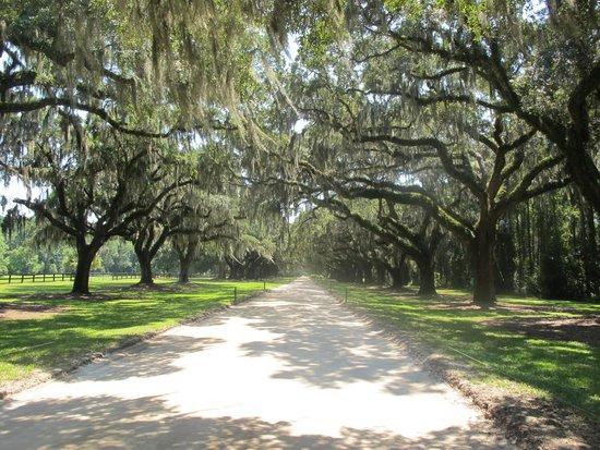 Boone Hall Plantation : Tree lined entrance