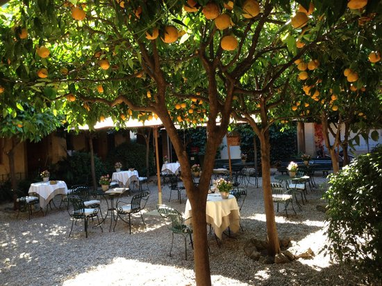 Hotel Santa Maria: Peaceful dining beneath the orange trees