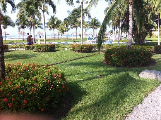 Hotel Playa Blanca Beach Resort : Los jardines