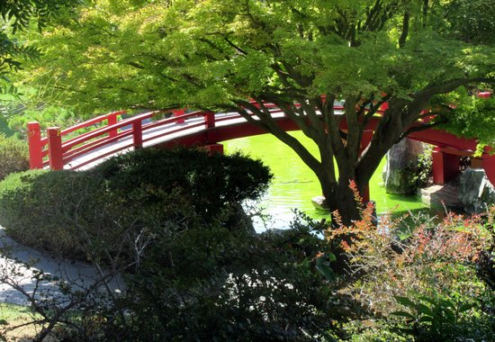japanese garden bridge japanese friendship garden san jose ca - Red Japanese Garden Bridge