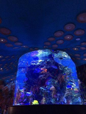 T-Rex : Aquarium at bar