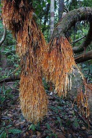 Amazonia Expeditions' Tahuayo Lodge: Roots