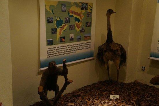 Aquatic and Natural History Museum: Museu