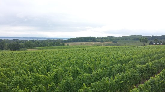 Brys Estate Vineyard & Winery: View from the deck