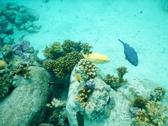 Some of the fish in the lagoon picture of four seasons for Bora bora fish