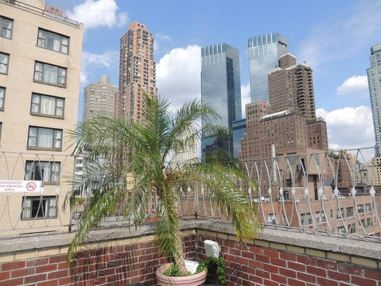 Holiday Inn Midtown / 57th St: Lovely palm atop the Midtown Holiday Inn