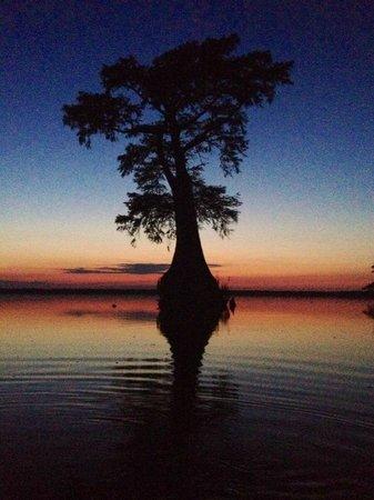 Great Dismal Swamp National Wildlife Refuge: 3