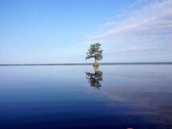 Great Dismal Swamp National Wildlife Refuge: 2