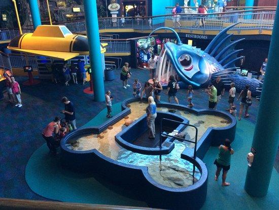 Ripley's Aquarium : Main lobby area