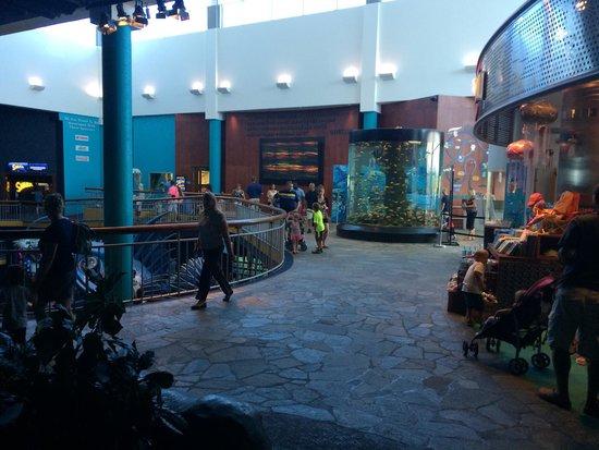 Ripley's Aquarium : Upper level area outside gift shop