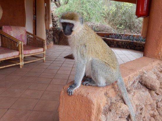 Amboseli Sopa Lodge: Lodge guest