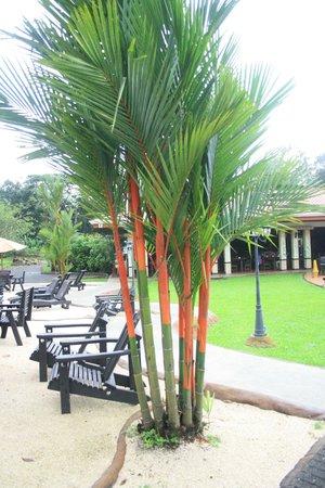 Volcano Lodge & Springs: frente al restaurant