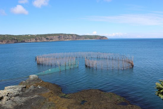 Things To Do On Grand Manan Island
