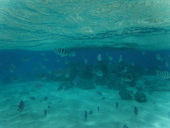 Aitutaki Lagoon Resort & Spa: snorkelling