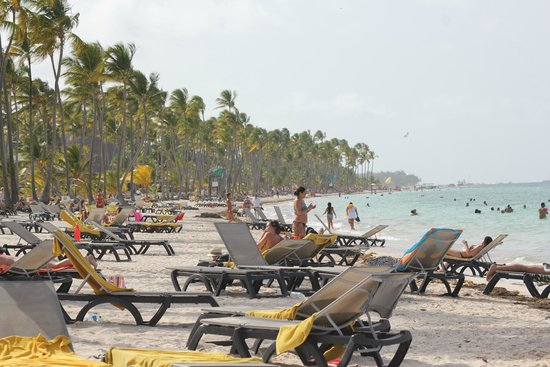 Barcelo Bavaro Palace : Beach - lots of chairs available