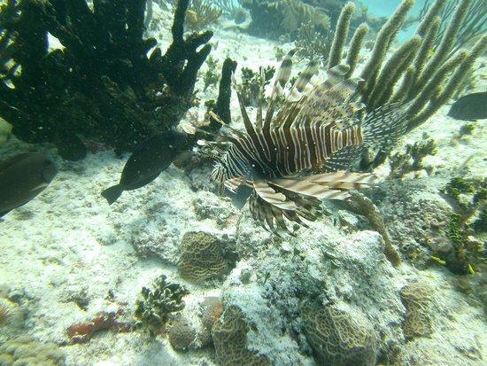 Phantom Divers: Lionfish