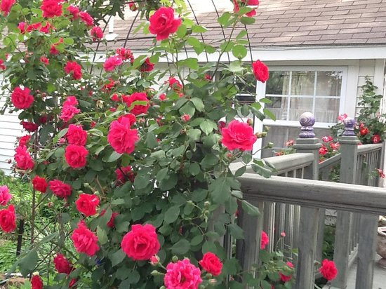 Mackintosh Inn Bed and Breakfast: Roses and Inn