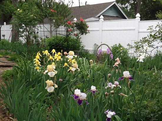 Mackintosh Inn Bed and Breakfast: Iris in bloom