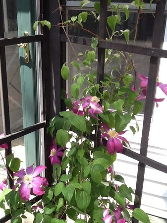 Mackintosh Inn Bed and Breakfast: Clematis on deck