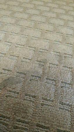 Ocean Shores, Waszyngton: Floor in room. Yuk!