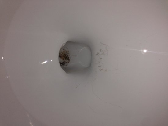 Cloverleaf Suites: That is rust in the toilet