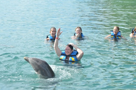 Dolphin Discovery Tortola : teaching the dolphin how to twirl? or he is teaching me?