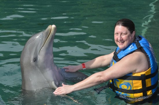 Dolphin Discovery Tortola: Photo op
