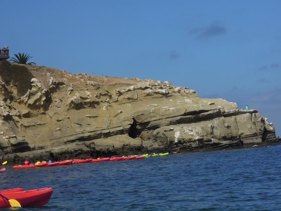 La Jolla Kayak: Il y a du monde