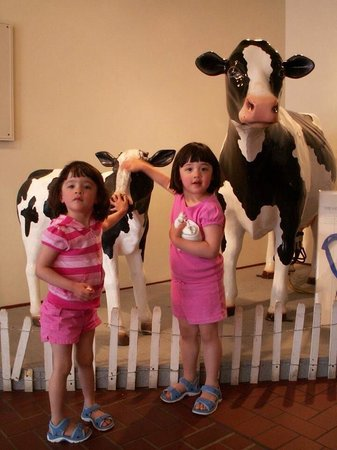 Tillamook Cheese Factory: The missing cows. Plywood cutouts are cheesy. Bring back the cows.