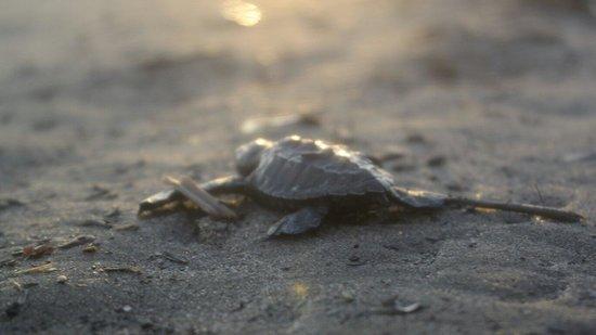 CasaMagna Marriott Puerto Vallarta Resort & Spa: Turtle release was memorizing