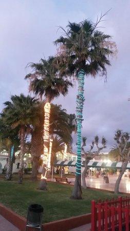 Duna Beach Bungalows: Palmepynt :)