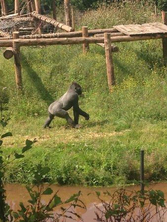 Paignton Zoo Environmental Park: Fantastic