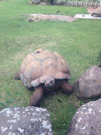 Paignton Zoo Environmental Park: Very friendly!