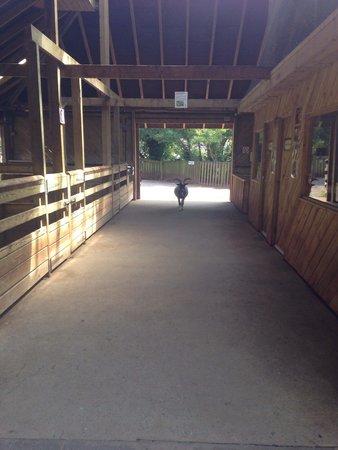 Paignton Zoo Environmental Park: Free to roam-wonderful!