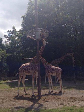 Paignton Zoo Environmental Park: Lovely.