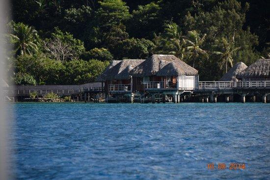 Sofitel Bora Bora Marara Beach Resort : Vue de la mer du pilotis