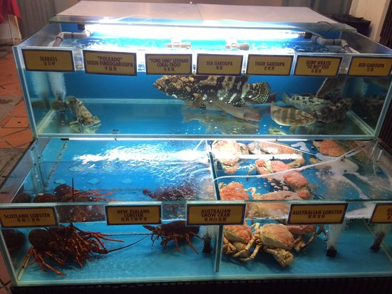 Boat Quay: Choose you fresh fish