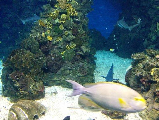 L'Aquarium de Barcelona : Poisson chirurgien