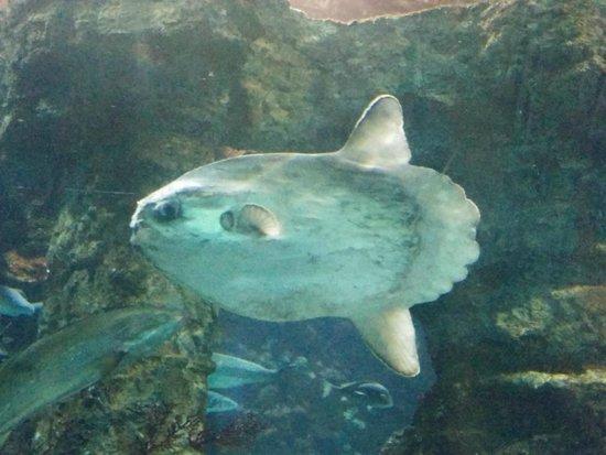 L'Aquarium de Barcelona : Rencontre dans le tunnel